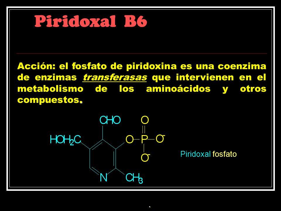 Piridoxal B6. Acción: el fosfato de piridoxina es una coenzima de enzimas transferasas que intervienen en el metabolismo de los aminoácidos y otros co