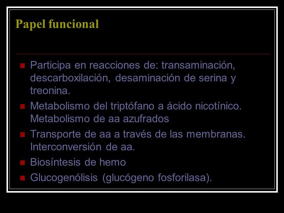 Papel funcional Participa en reacciones de: transaminación, descarboxilación, desaminación de serina y treonina. Metabolismo del triptófano a ácido ni