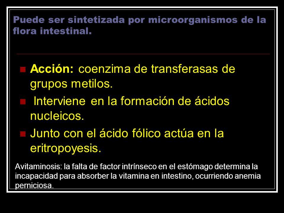 Acción: coenzima de transferasas de grupos metilos. Interviene en la formación de ácidos nucleicos. Junto con el ácido fólico actúa en la eritropoyesi