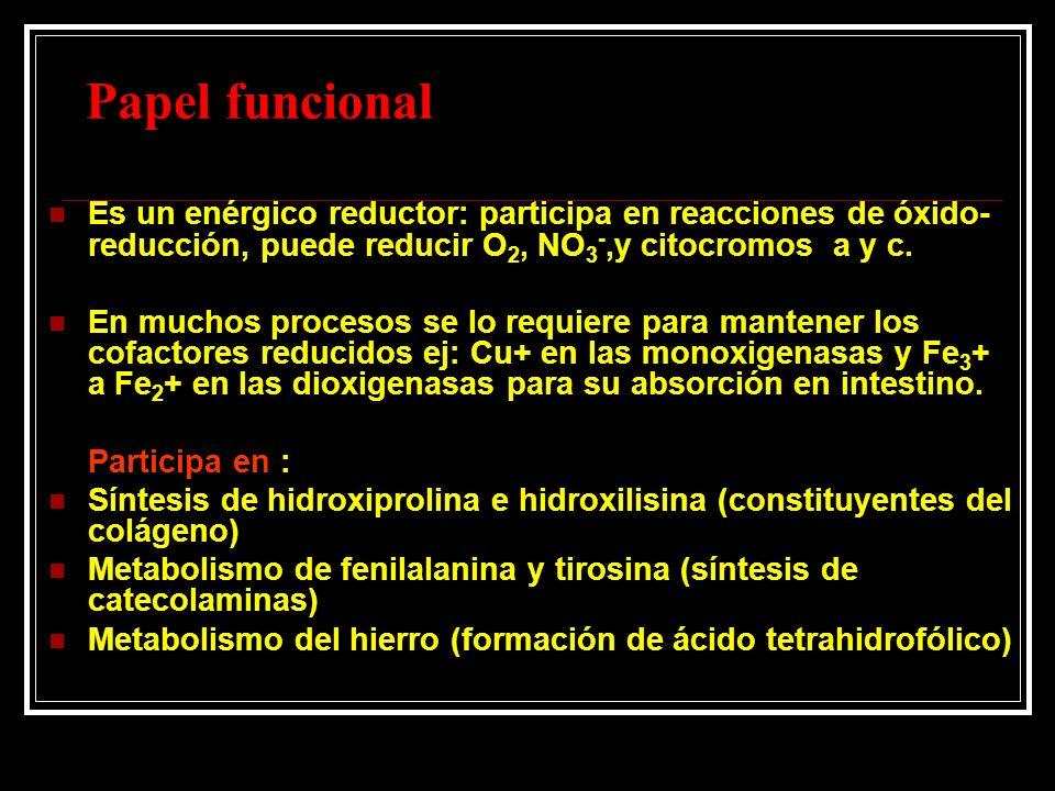 Papel funcional Es un enérgico reductor: participa en reacciones de óxido- reducción, puede reducir O 2, NO 3 -,y citocromos a y c. En muchos procesos