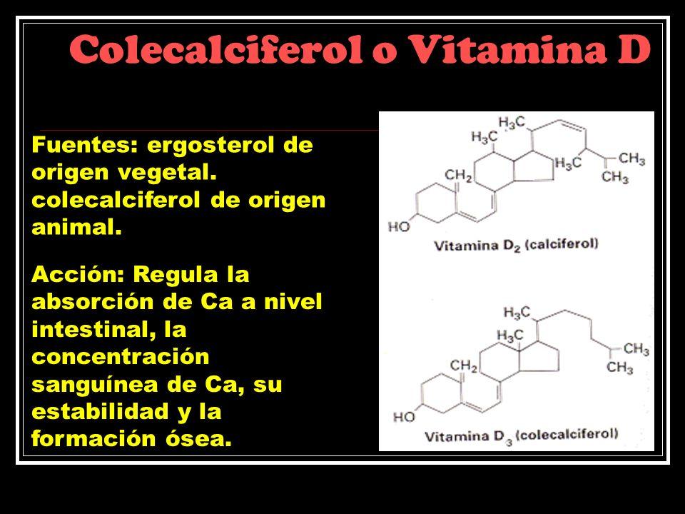 Colecalciferol o Vitamina D Fuentes: ergosterol de origen vegetal. colecalciferol de origen animal. Acción: Regula la absorción de Ca a nivel intestin