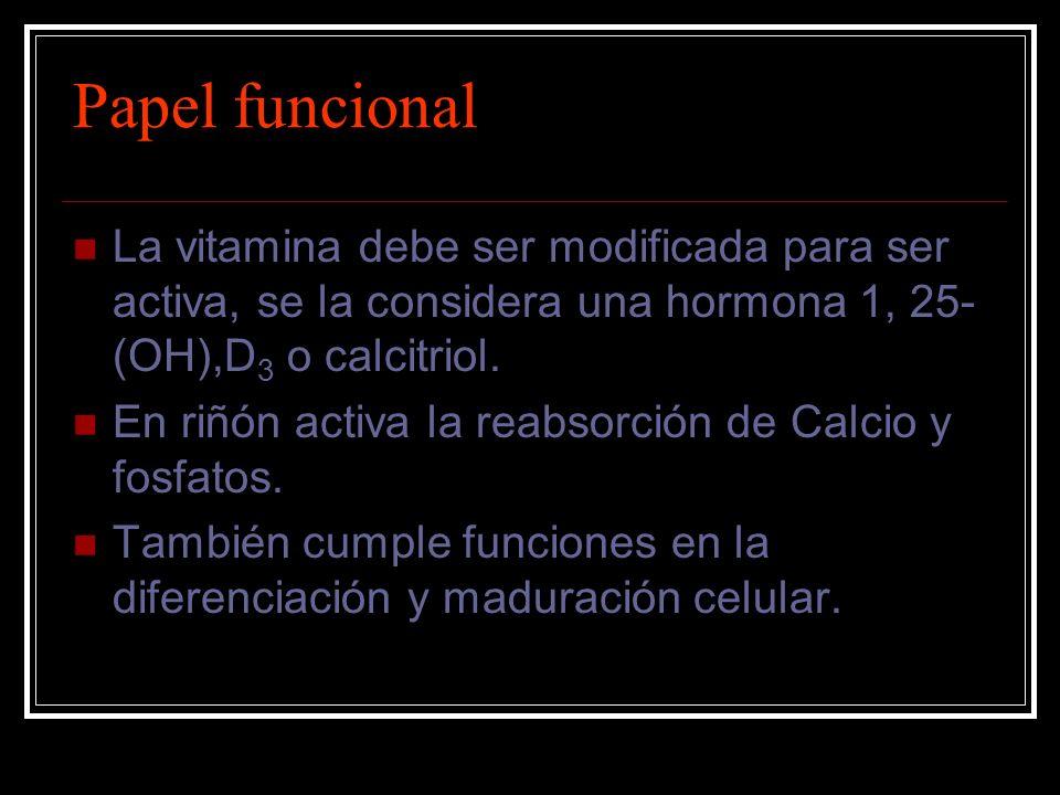 Papel funcional La vitamina debe ser modificada para ser activa, se la considera una hormona 1, 25- (OH),D 3 o calcitriol. En riñón activa la reabsorc
