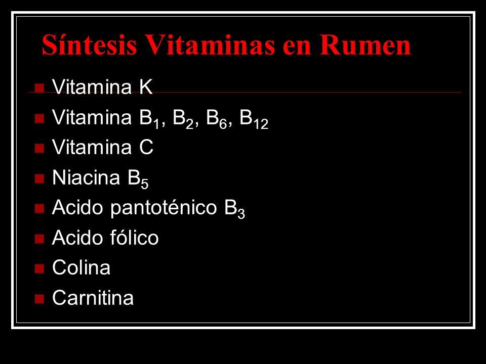 Síntesis Vitaminas en Rumen Vitamina K Vitamina B 1, B 2, B 6, B 12 Vitamina C Niacina B 5 Acido pantoténico B 3 Acido fólico Colina Carnitina