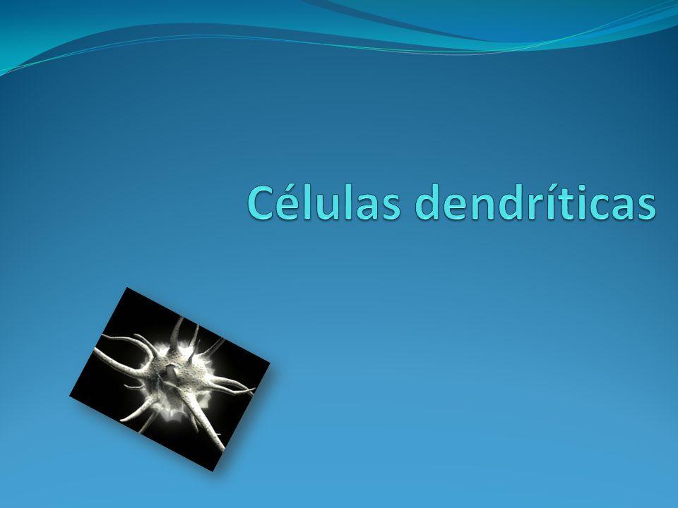 Células dendríticas (DC) Se originan a partir de precursores hematopoyéticos CD34+.