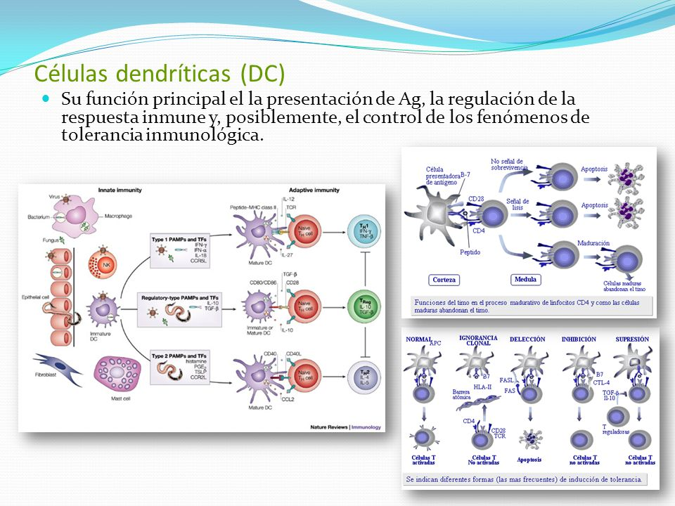 Para determinar el origen de las células malignas se seleccionaron pacientes en la base de un fenotipo homogéneo.