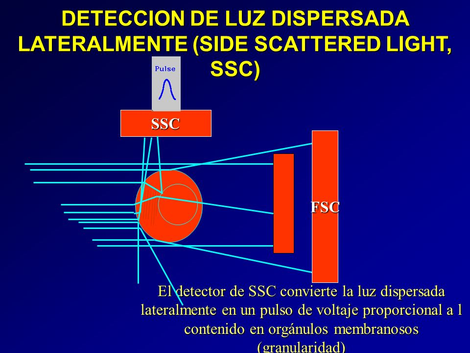 DETECCION DE LUZ DISPERSADA LATERALMENTE (SIDE SCATTERED LIGHT, SSC) FSC SSC El detector de SSC convierte la luz dispersada lateralmente en un pulso d