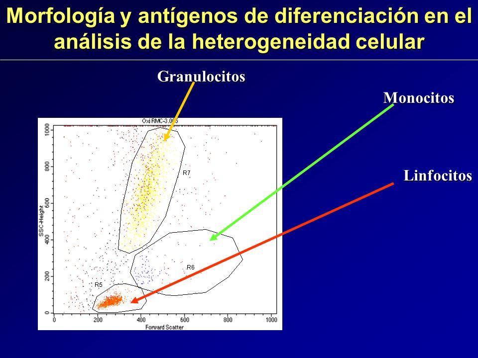 Granulocitos Monocitos Linfocitos Morfología y antígenos de diferenciación en el análisis de la heterogeneidad celular