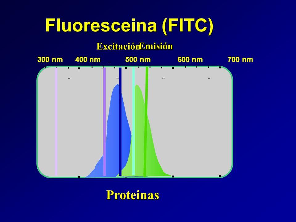 Fluoresceina (FITC) 400 nm500 nm600 nm700 nm Wavelength Proteinas Excitación Emisión 300 nm 400 nm 500 nm 600 nm 700 nm