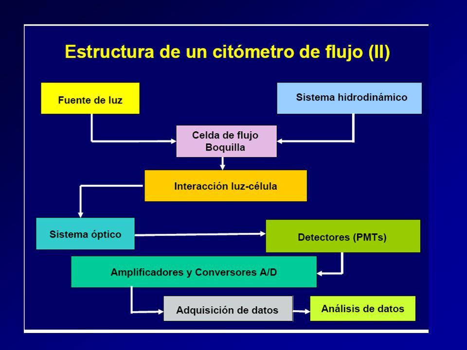 DETECCION DE LUZ DISPERSADA LATERALMENTE (SIDE SCATTERED LIGHT, SSC) FSC SSC El detector de SSC convierte la luz dispersada lateralmente en un pulso de voltaje proporcional a l contenido en orgánulos membranosos (granularidad)