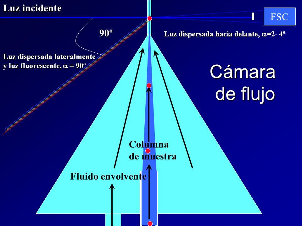 Cámara de flujo FSC 90º Fluido envolvente Columna de muestra Luz dispersada lateralmente y luz fluorescente, = 90 y luz fluorescente, = 90º Luz incide