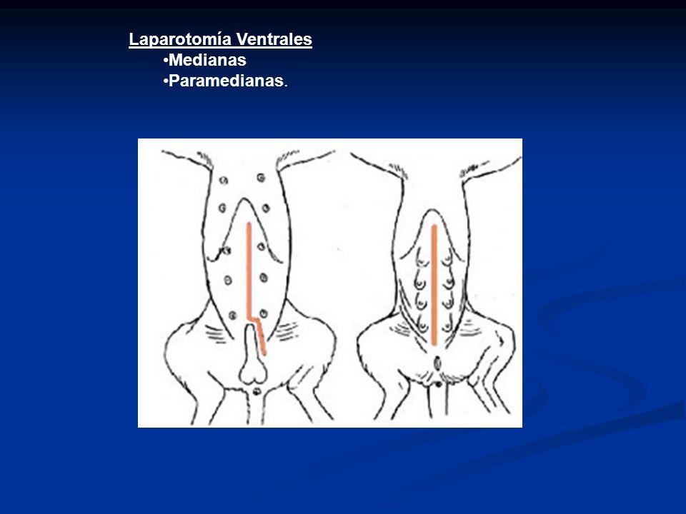 Laparotomía Ventrales Medianas Paramedianas.