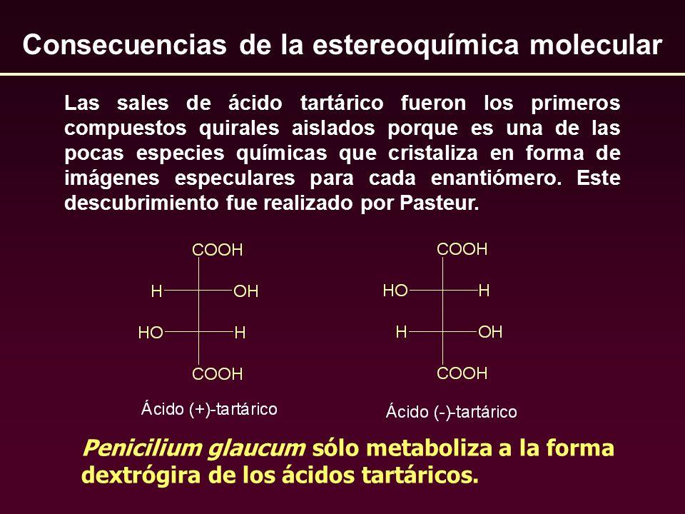 Penicilium glaucum sólo metaboliza a la forma dextrógira de los ácidos tartáricos. Consecuencias de la estereoquímica molecular Las sales de ácido tar