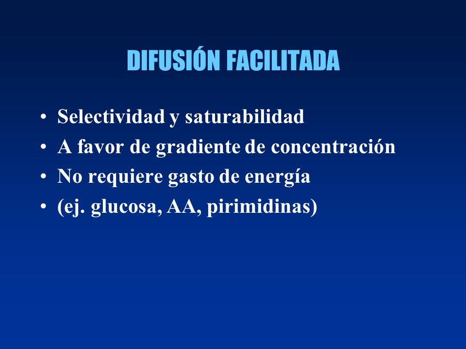 DIFUSIÓN FACILITADA Selectividad y saturabilidad A favor de gradiente de concentración No requiere gasto de energía (ej. glucosa, AA, pirimidinas)