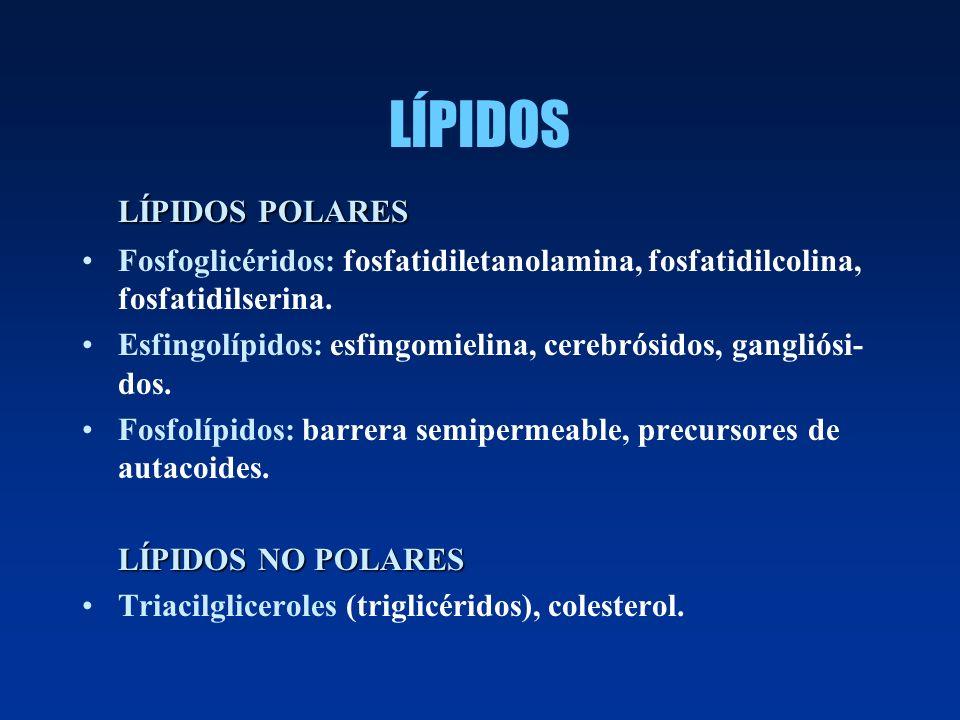 LÍPIDOS LÍPIDOS POLARES Fosfoglicéridos: fosfatidiletanolamina, fosfatidilcolina, fosfatidilserina. Esfingolípidos: esfingomielina, cerebrósidos, gang