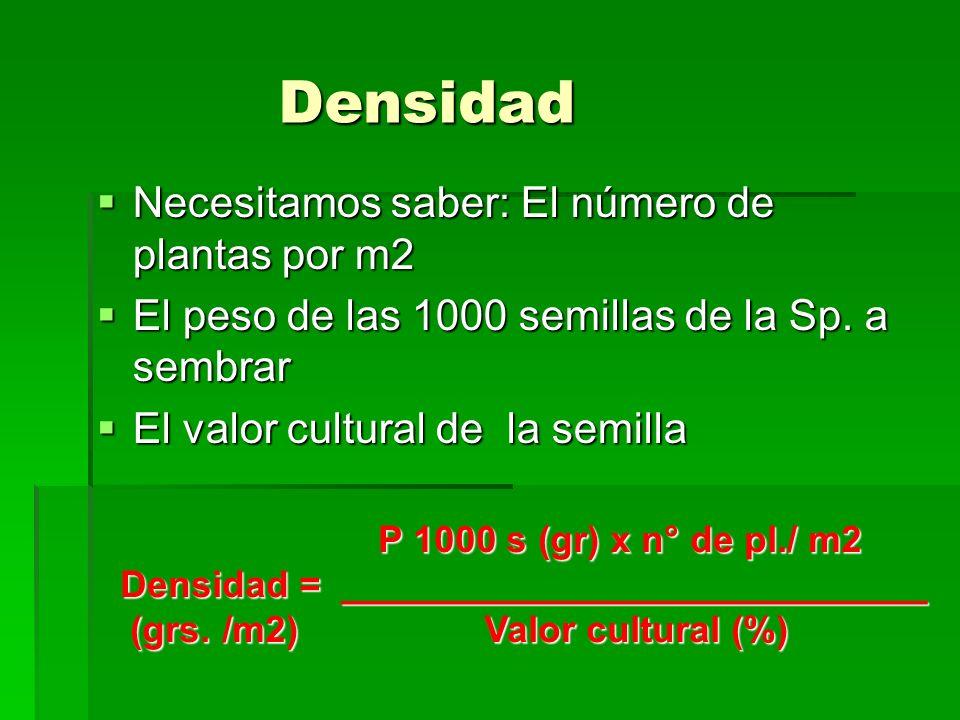 Densidad Necesitamos saber: El número de plantas por m2 Necesitamos saber: El número de plantas por m2 El peso de las 1000 semillas de la Sp. a sembra