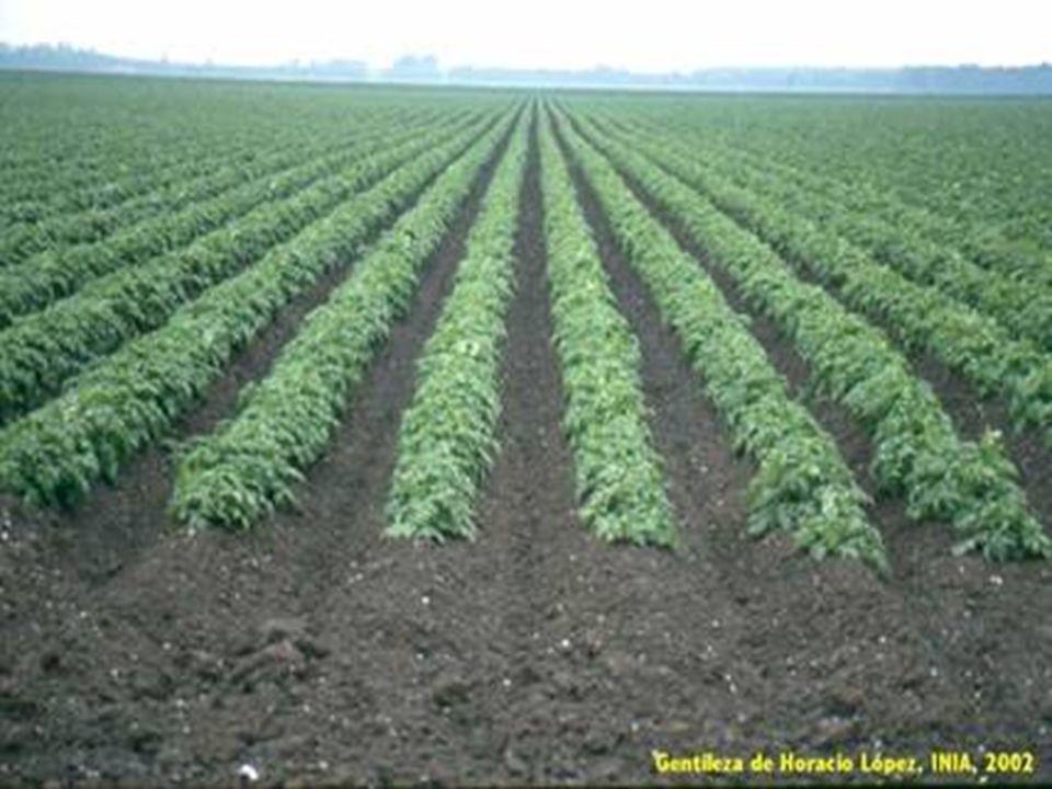 Las propiedades que deben reunir los lotes de semilla de calidad son: Genuinidad: el lote de semillas deber responder a la especie y cultivar deseado.