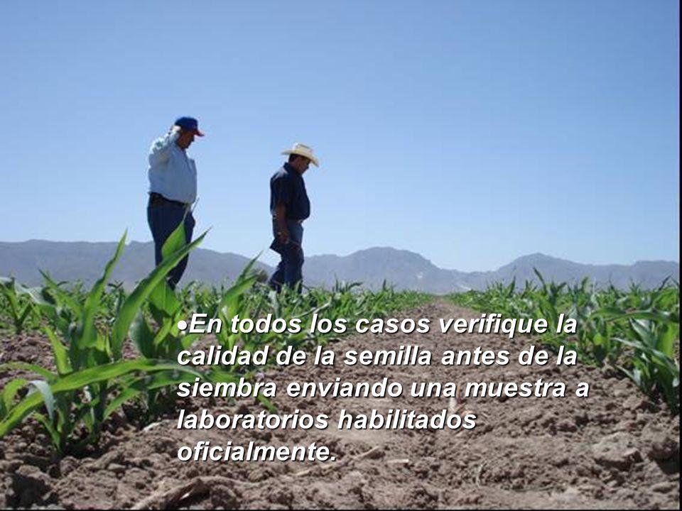 En todos los casos verifique la calidad de la semilla antes de la siembra enviando una muestra a laboratorios habilitados oficialmente. En todos los c