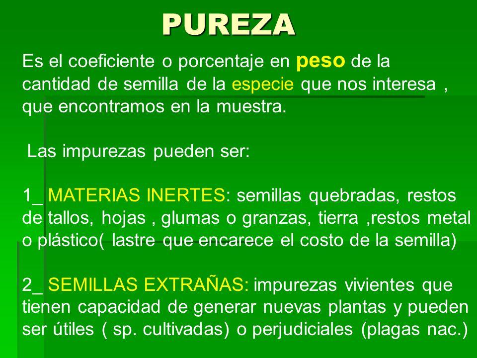 Si piensa usar semilla de producción propia, se debe comenzar con la siembra de lotes de semilla pura (fiscalizada).