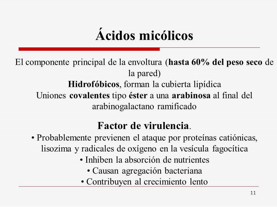 11 Ácidos micólicos El componente principal de la envoltura (hasta 60% del peso seco de la pared) Hidrofóbicos, forman la cubierta lipídica Uniones co
