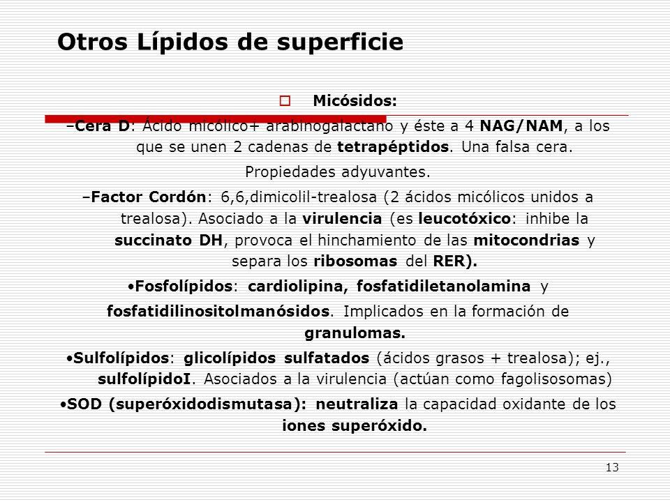 13 Otros Lípidos de superficie Micósidos: –Cera D: Ácido micólico+ arabinogalactano y éste a 4 NAG/NAM, a los que se unen 2 cadenas de tetrapéptidos.