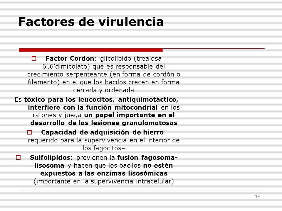 14 Factores de virulencia Factor Cordon: glicolípido (trealosa 6,6dimicolato) que es responsable del crecimiento serpenteante (en forma de cordón o fi