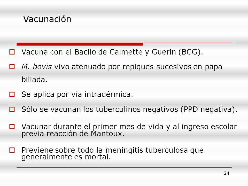 24 Vacunación Vacuna con el Bacilo de Calmette y Guerin (BCG). M. bovis vivo atenuado por repiques sucesivos en papa biliada. Se aplica por vía intrad