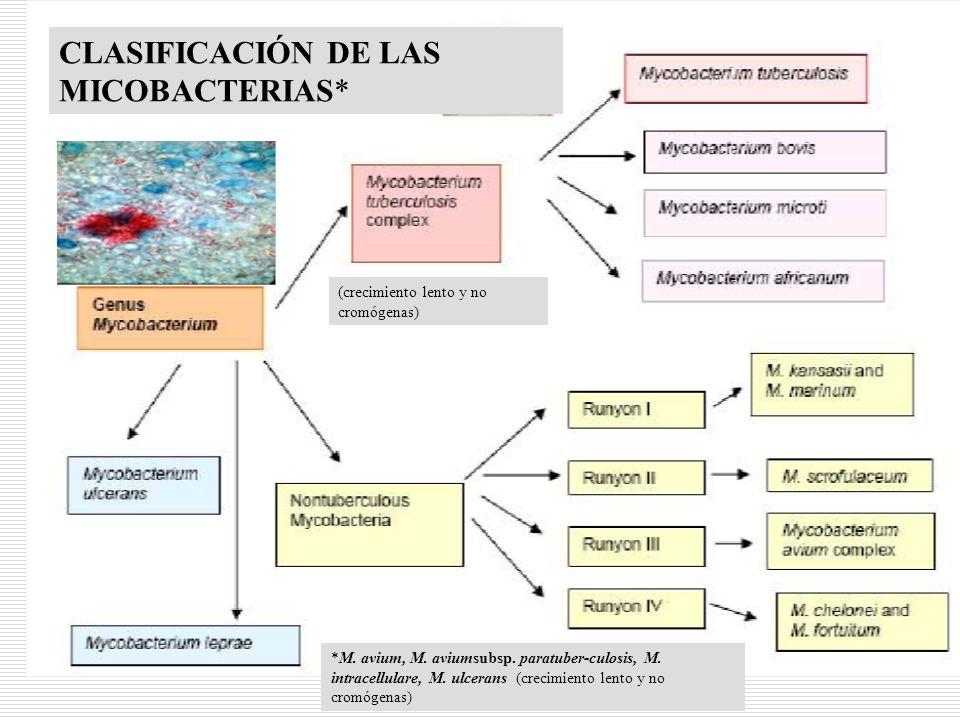 6 CLASIFICACIÓN DE LAS MICOBACTERIAS* (crecimiento lento y no cromógenas) *M. avium, M. aviumsubsp. paratuber-culosis, M. intracellulare, M. ulcerans