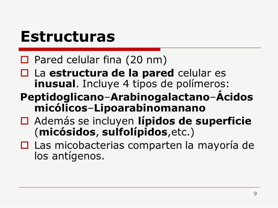 9 Estructuras Pared celular fina (20 nm) La estructura de la pared celular es inusual. Incluye 4 tipos de polímeros: Peptidoglicano–Arabinogalactano–Á
