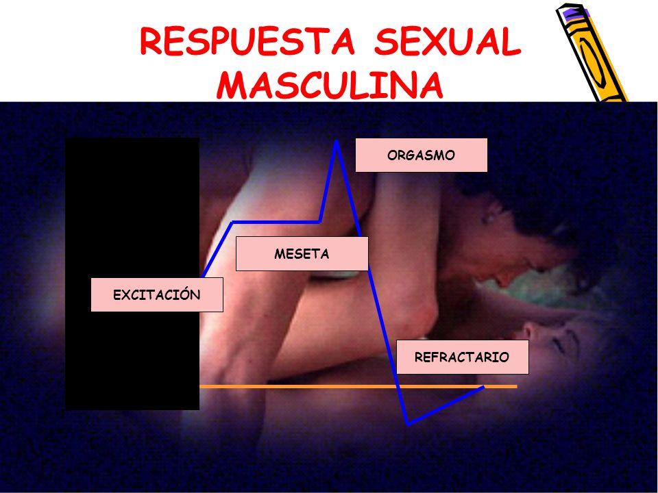 RESPUESTA SEXUAL MASCULINA EXCITACIÓN MESETA ORGASMO REFRACTARIO