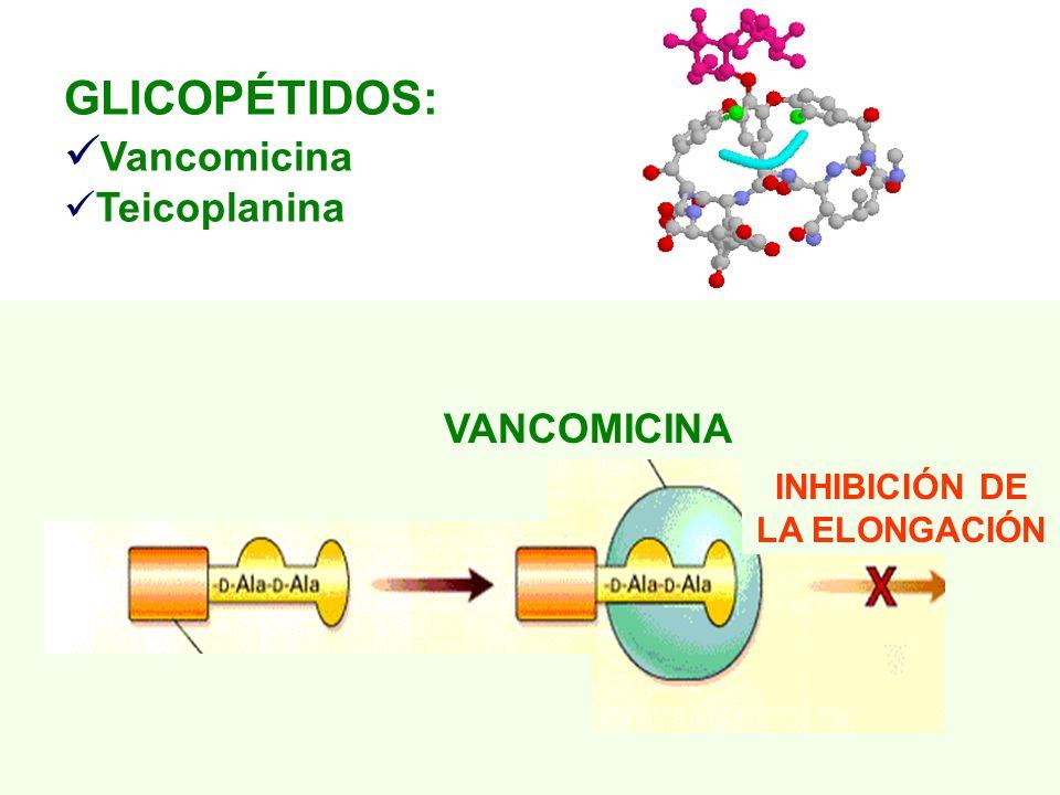 GLICOPÉTIDOS: Vancomicina Teicoplanina INHIBICIÓN DE LA ELONGACIÓN VANCOMICINA
