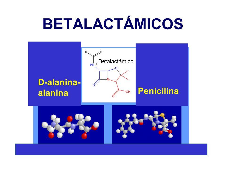 BETALACTÁMICOS D-alanina- alanina Penicilina Betalactámico