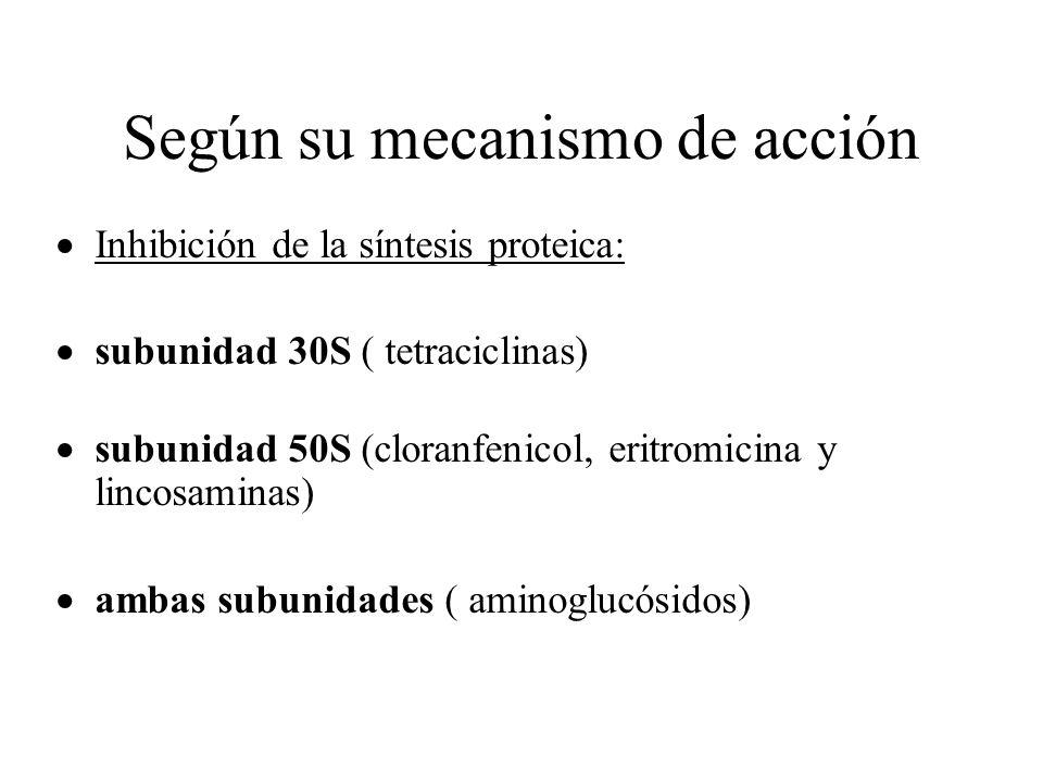 Según su mecanismo de acción Inhibición de la síntesis proteica: subunidad 30S ( tetraciclinas) subunidad 50S (cloranfenicol, eritromicina y lincosami