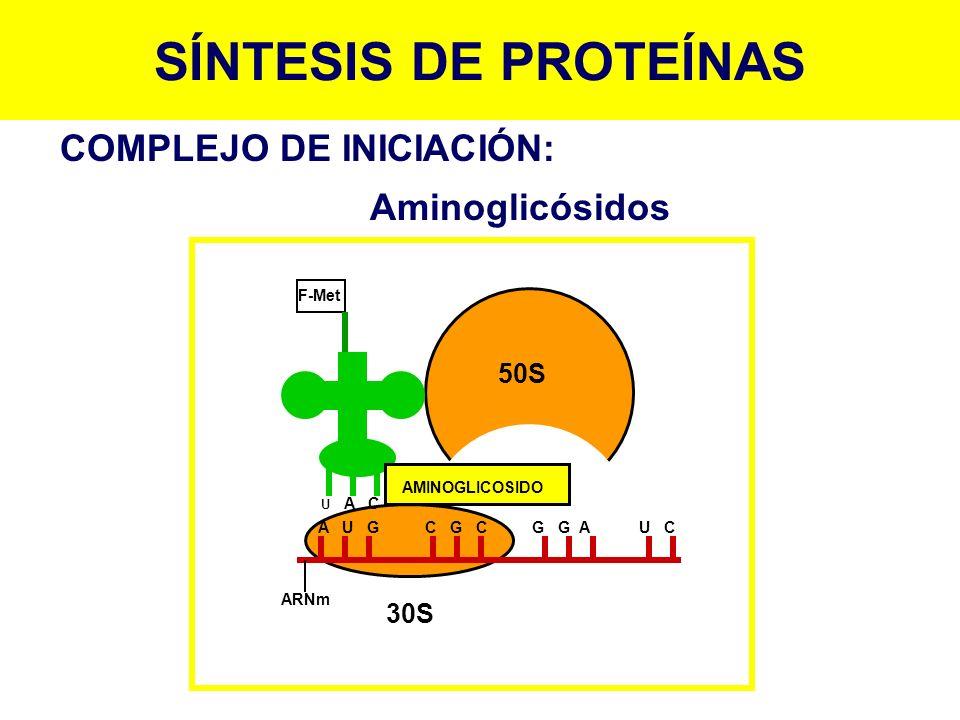 F-Met ARNm A U G C G C G G A U C U A C AMINOGLICOSIDO 50S 30S COMPLEJO DE INICIACIÓN: Aminoglicósidos SÍNTESIS DE PROTEÍNAS