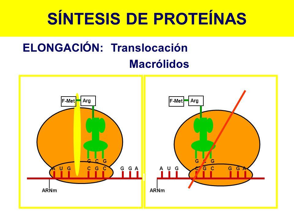 SÍNTESIS DE PROTEÍNAS ELONGACIÓN:Translocación Macrólidos ARNm F-Met Arg G C G A U G C G C G G A ARNm Arg G C G A U G C G C G G A F-Met