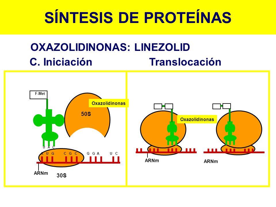 SÍNTESIS DE PROTEÍNAS F-Met ARNm A U G C G C G G A U C U A C 50S 30S Oxazolidinonas ARNm Oxazolidinonas OXAZOLIDINONAS: LINEZOLID C. Iniciación Transl