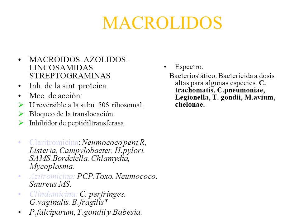 MACROLIDOS MACROIDOS. AZOLIDOS. LINCOSAMIDAS. STREPTOGRAMINAS Inh. de la sínt. proteica. Mec. de acción: U reversible a la subu. 50S ribosomal. Bloque