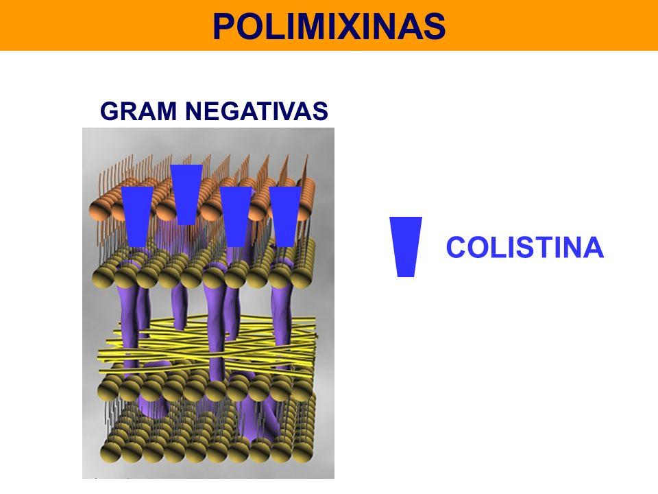 POLIMIXINAS GRAM NEGATIVAS COLISTINA