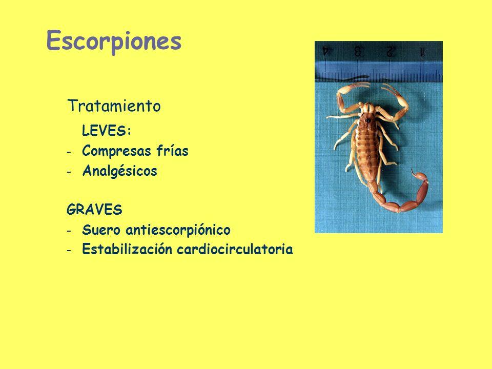 Escorpiones Tratamiento LEVES: – Compresas frías – Analgésicos GRAVES – Suero antiescorpiónico – Estabilización cardiocirculatoria