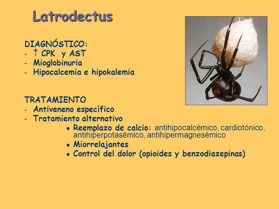 Latrodectus DIAGNÓSTICO: – CPK y AST – Mioglobinuria – Hipocalcemia e hipokalemia TRATAMIENTO – Antiveneno específico – Tratamiento alternativo Reempl