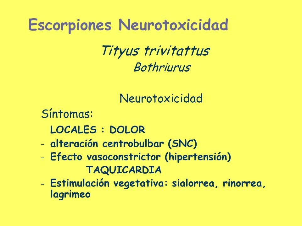 Escorpiones Neurotoxicidad Tityus trivitattus Bothriurus Neurotoxicidad Síntomas: LOCALES : DOLOR – alteración centrobulbar (SNC) – Efecto vasoconstri
