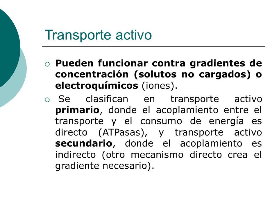 Transporte activo Pueden funcionar contra gradientes de concentración (solutos no cargados) o electroquímicos (iones). Se clasifican en transporte act