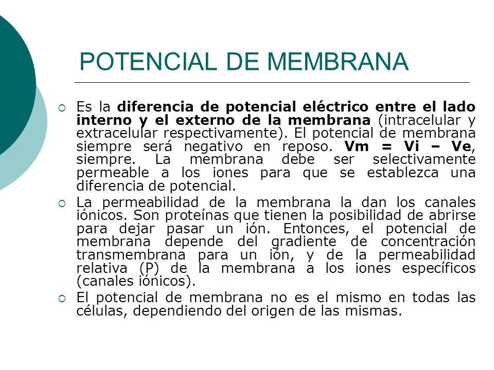 POTENCIAL DE MEMBRANA Es la diferencia de potencial eléctrico entre el lado interno y el externo de la membrana (intracelular y extracelular respectiv