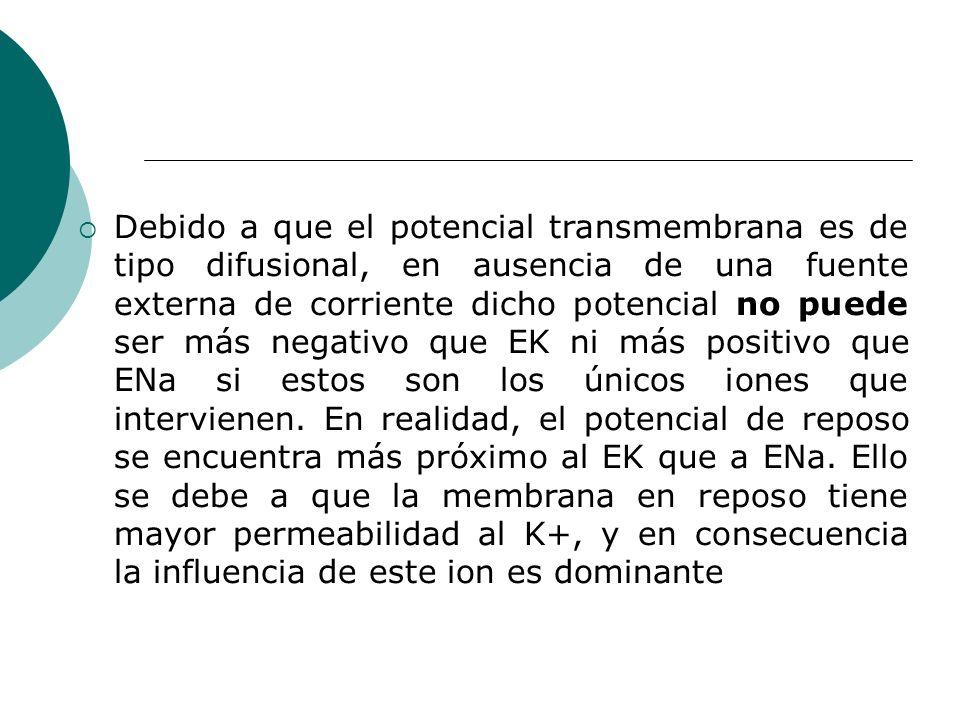Debido a que el potencial transmembrana es de tipo difusional, en ausencia de una fuente externa de corriente dicho potencial no puede ser más negativ