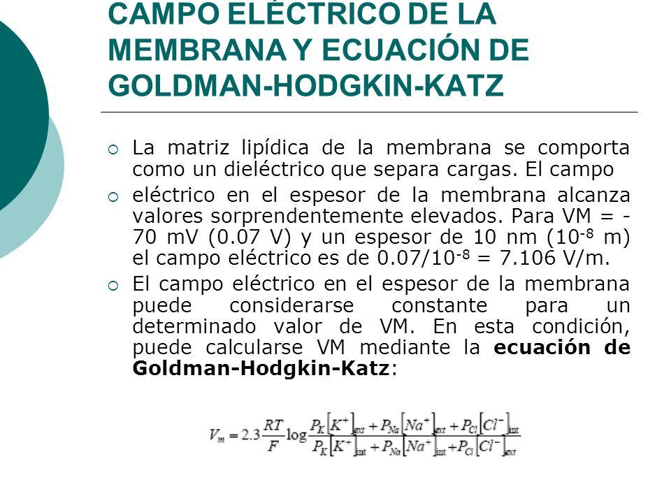 CAMPO ELÉCTRICO DE LA MEMBRANA Y ECUACIÓN DE GOLDMAN-HODGKIN-KATZ La matriz lipídica de la membrana se comporta como un dieléctrico que separa cargas.