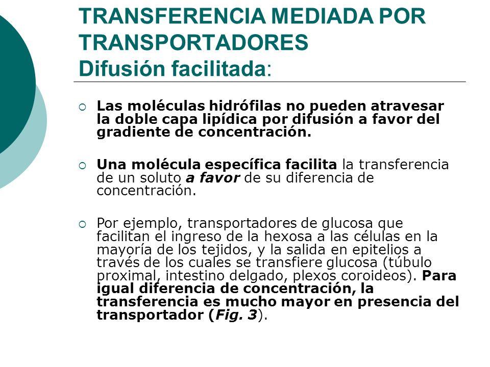 TRANSFERENCIA MEDIADA POR TRANSPORTADORES Difusión facilitada: Las moléculas hidrófilas no pueden atravesar la doble capa lipídica por difusión a favo