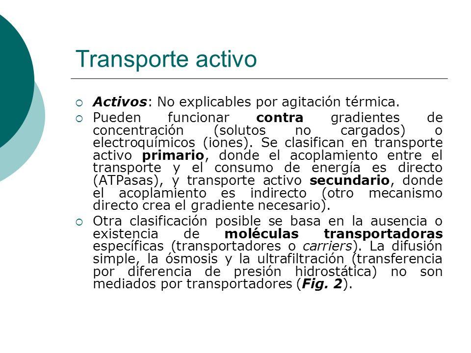 Transporte activo Activos: No explicables por agitación térmica. Pueden funcionar contra gradientes de concentración (solutos no cargados) o electroqu