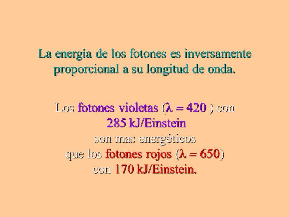 La energía de los fotones es inversamente proporcional a su longitud de onda. Los fotones violetas ( con 285 kJ/Einstein 285 kJ/Einstein son mas energ