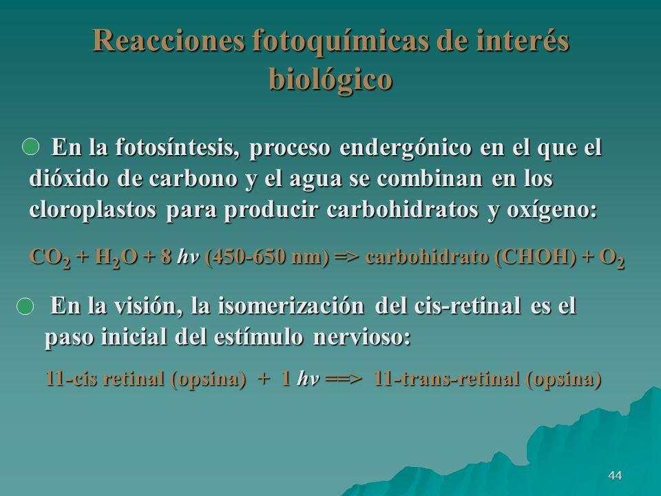 44 Reacciones fotoquímicas de interés biológico En la visión, la isomerización del cis-retinal es el paso inicial del estímulo nervioso: 11-cis retina