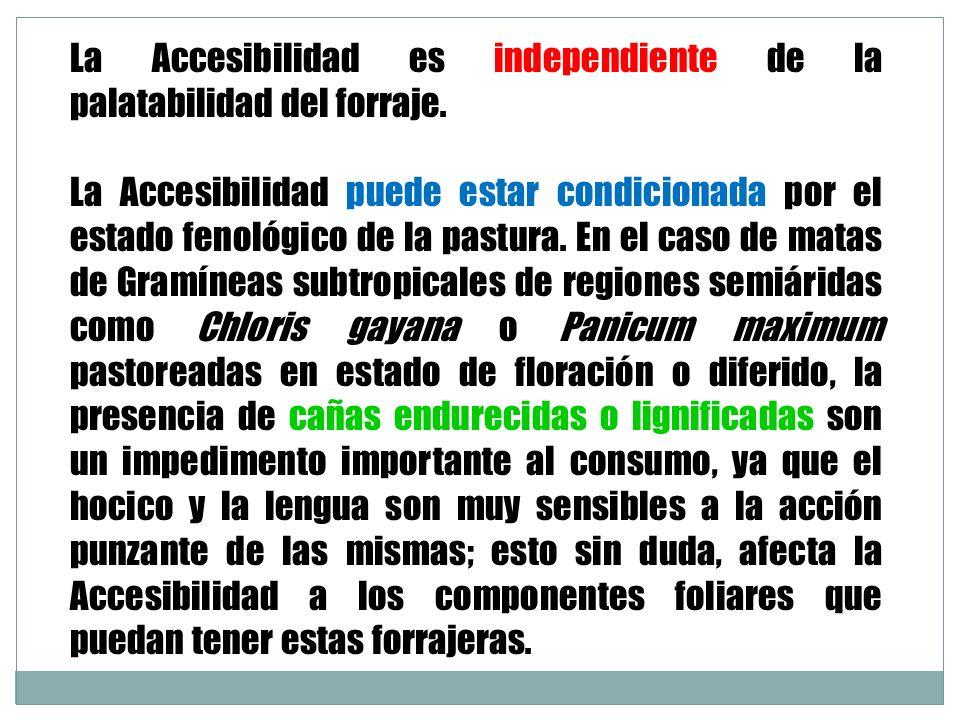 La Accesibilidad es independiente de la palatabilidad del forraje. La Accesibilidad puede estar condicionada por el estado fenológico de la pastura. E