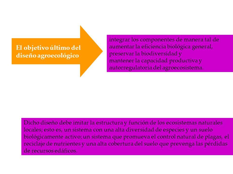 Estrategias para restaurar la diversidad agrícola en el tiempo y el espacio Rotaciones de cultivo Policultivos Sistemas agroforestales Cultivos de cobertura Integración animal en el agroecosistema Estas formas diversificadas de agroecosistemas comparten las siguientes características: a.Mantienen la cubierta vegetativa b.